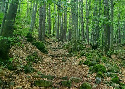 Пътеката за Бай Кръстьо