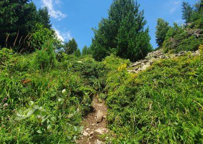 Пътеката към Орлово гнездо