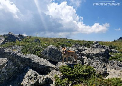 Куче, което реши да ни следва от Бай Кръстьо до Златните мостове