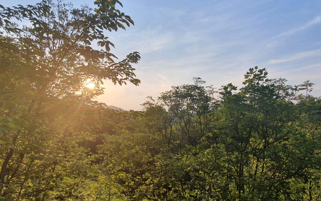 Кратка разходка на Витоша: Княжево – Бялата вода – Тихия кът