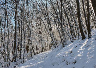 Пътека Боянско езеро зима